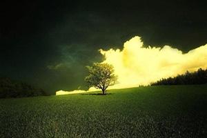 黑芝麻对白癜风的治疗有什么样的帮助